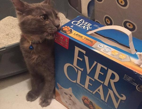 EverClean Topaklasan Kedi Kumu