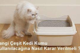 Hangi Çeşit Kedi Kumu Kullanılacağına Nasıl Karar Verilmeli