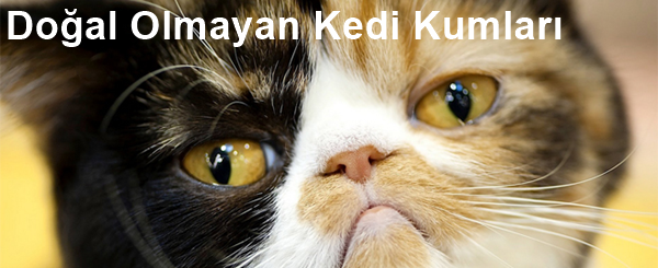 Doğal Olmayan Kedi Kumları