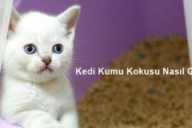 Kedi Kumu Kokusu Nasıl Giderilir