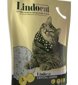 lindocat-lemon-1.jpeg