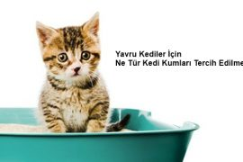 Yavru Kediler için Ne Tür Kedi Kumları Tercih Edilmeli