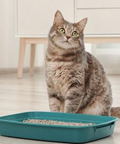 Doğal Kedi Kumları